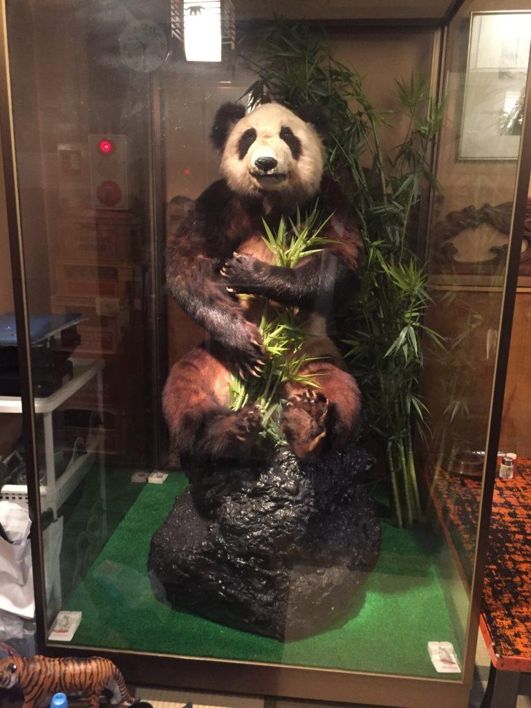 パンダはく製2
